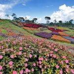Disewakan Villa Dekat Taman Bunga Nusantara Fasilitas Lengkap & Murah