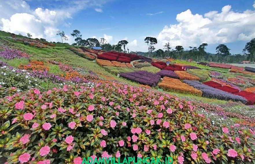 villa dekat taman bunga nusantara